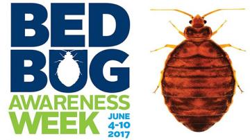 Bed Bugs What Every Camp Needs To Know American Camp Association
