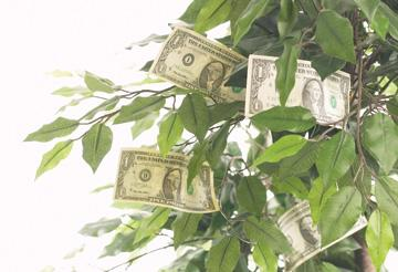 Money in branches